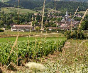 Vue du vignoble des Riceys